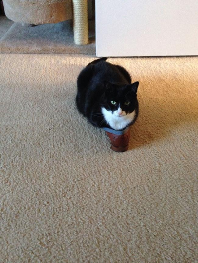 7947410-funny-cats-if-it-fits-i-sits-9-650-8c3e5d52e1-1484578585