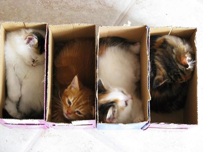 7948760-funny-cats-if-it-fits-i-sits-4-650-0afa248af4-1484578585