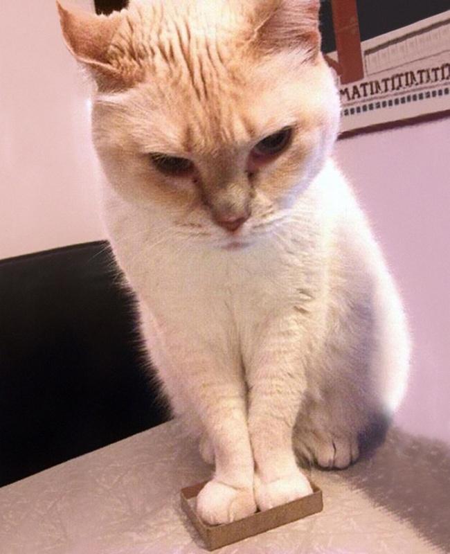 7948860-funny-cats-if-it-fits-i-sits-19-650-a542d8629a-1484578585