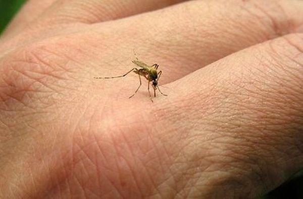 1390200845_1372167498_ukus-komara