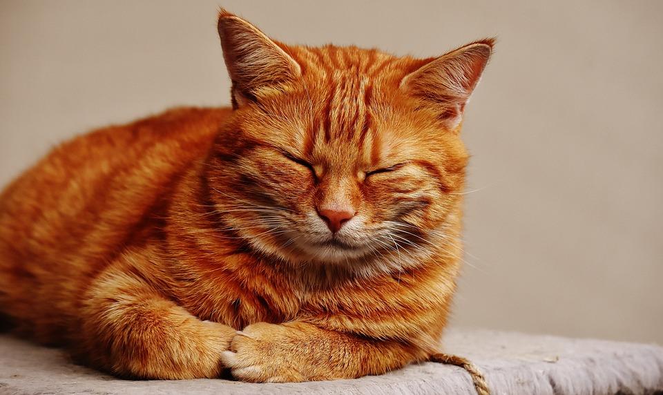 cat_1675429_960_720