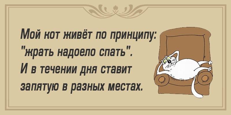 Анекдоты Про Котов