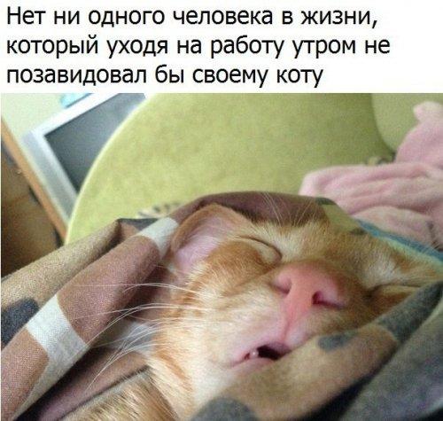 1495090756_anekdoty