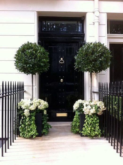 over-grwon-planters-guard-doorway-718x96